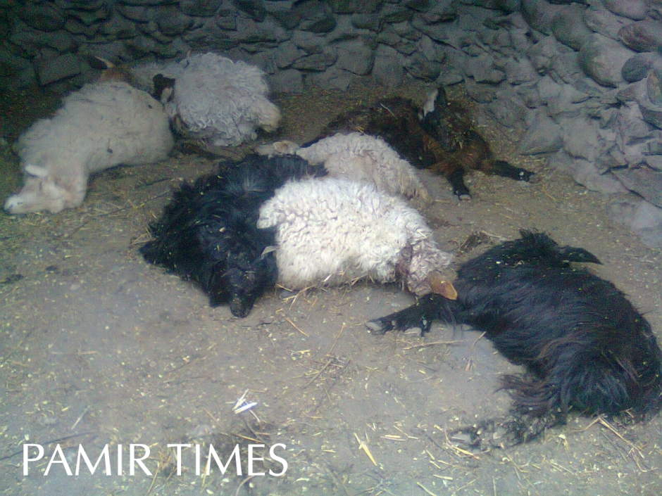 Some of the dead animals reportedly killed by a snow leopard