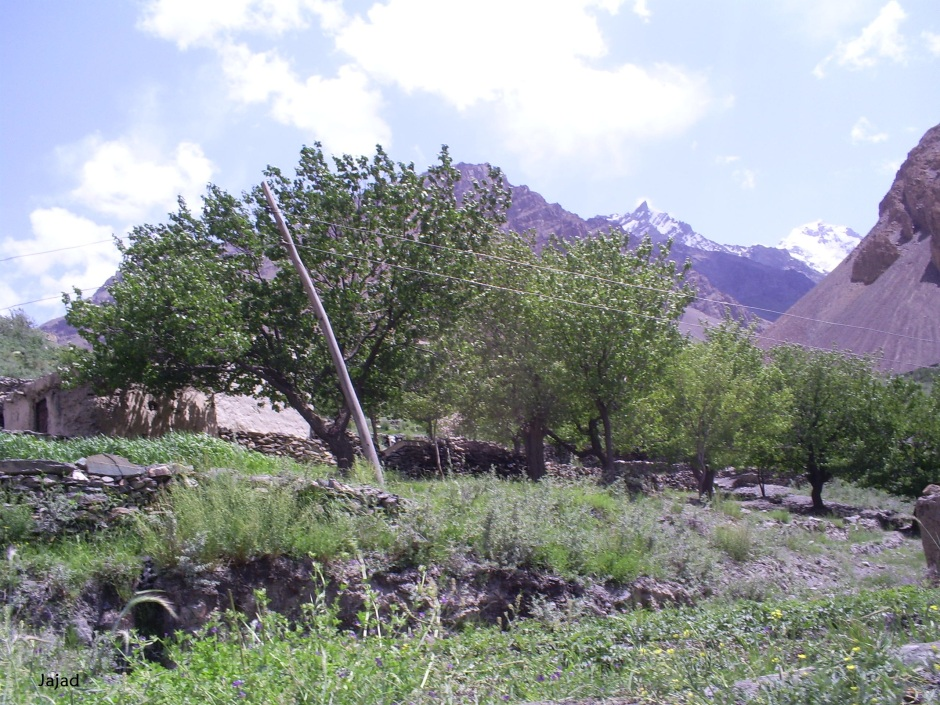 Wooden poles have been erected in Shimshal valley for electricity supply